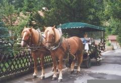 our horse-drawn carriage